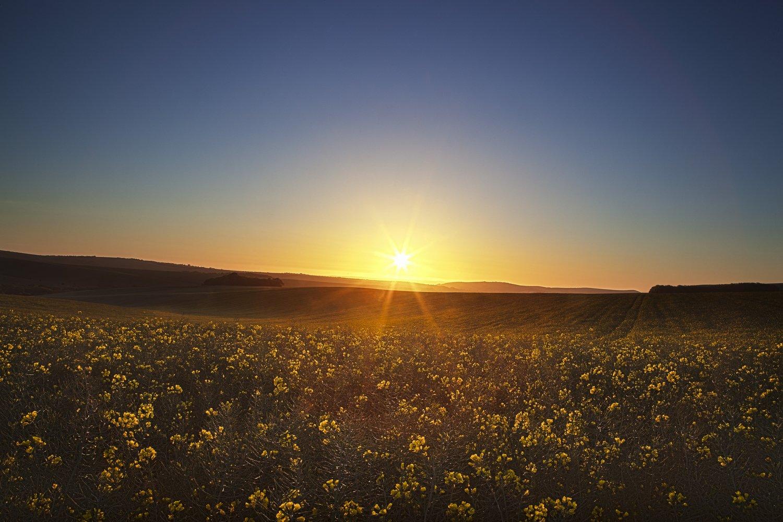 Sunrise over rape field woodingdean